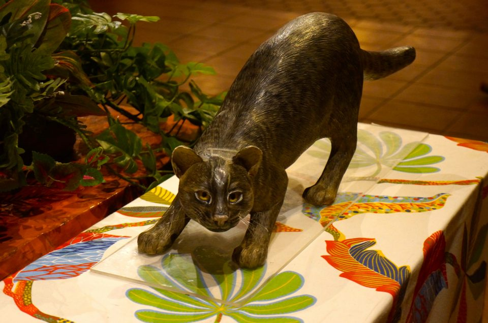 El gato montés yamenko de Iriomote