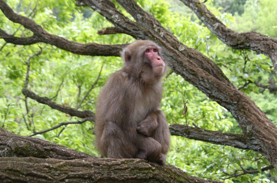 Parque de monos Iwatayama