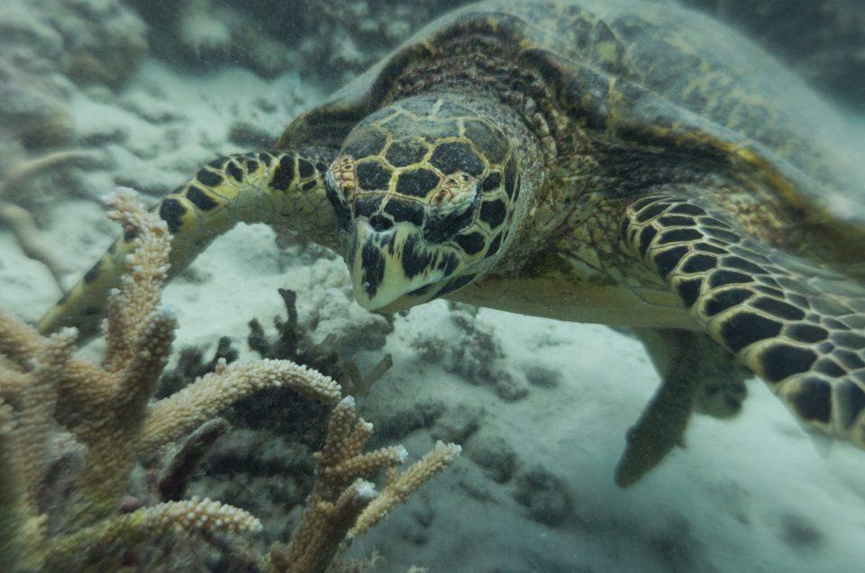 Snorkel con tortugas marinas