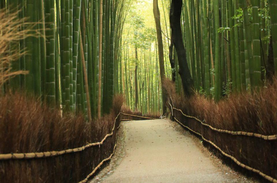 Arboledas de bambú