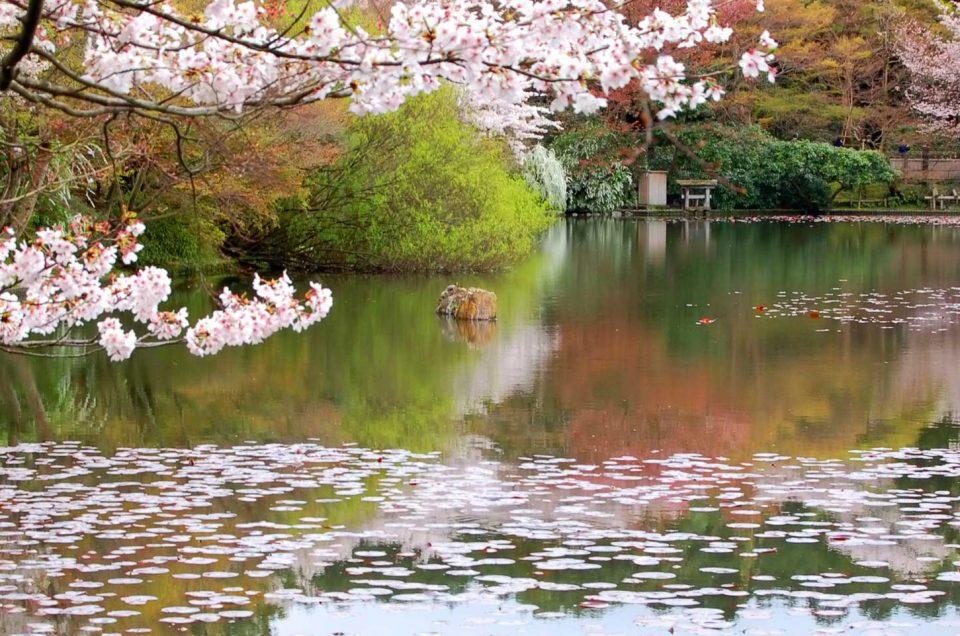 Recorrido por el Jardín Secreto de Kioto
