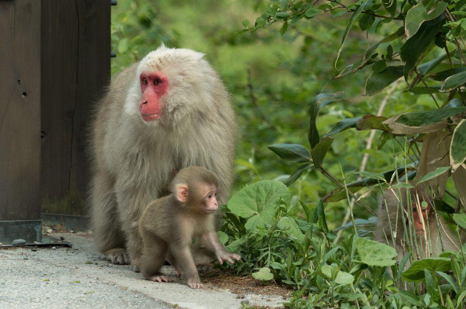 Encuentros con monos