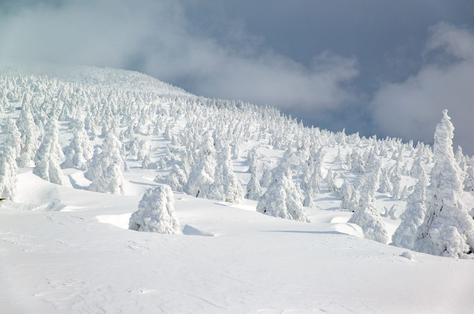 Monstruos de nieve